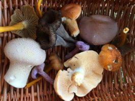 Wild Mushrooms - How to Forage for Mushrooms