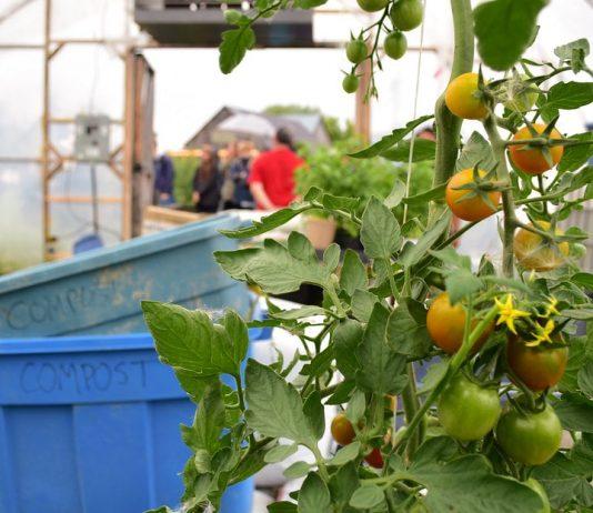 10 Best Beginner's Tips for Greenhouse Growing Garden Produces