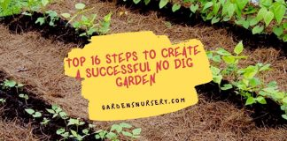 16 Steps to Create a Successful No Dig Garden