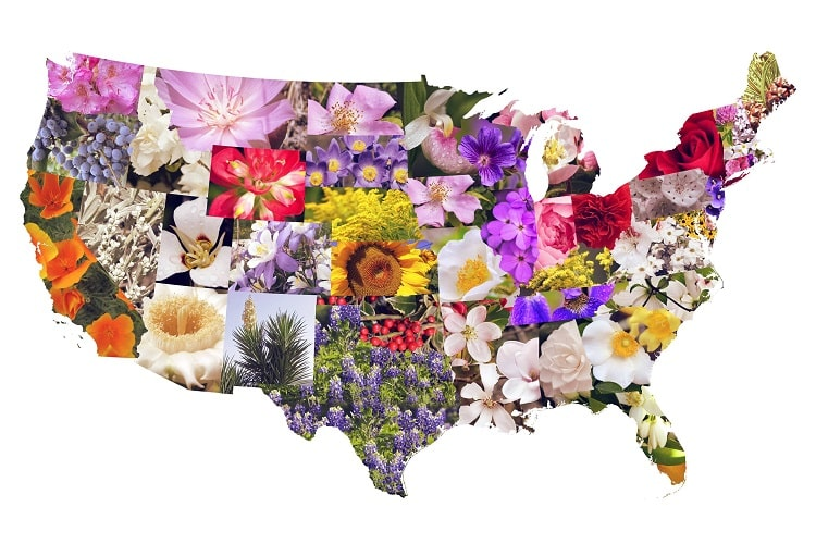 50 State Flowers, State Tree, State Birds, and 50 State Nicknames USA