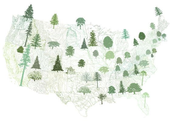 50 State Trees: Rooted in Local History