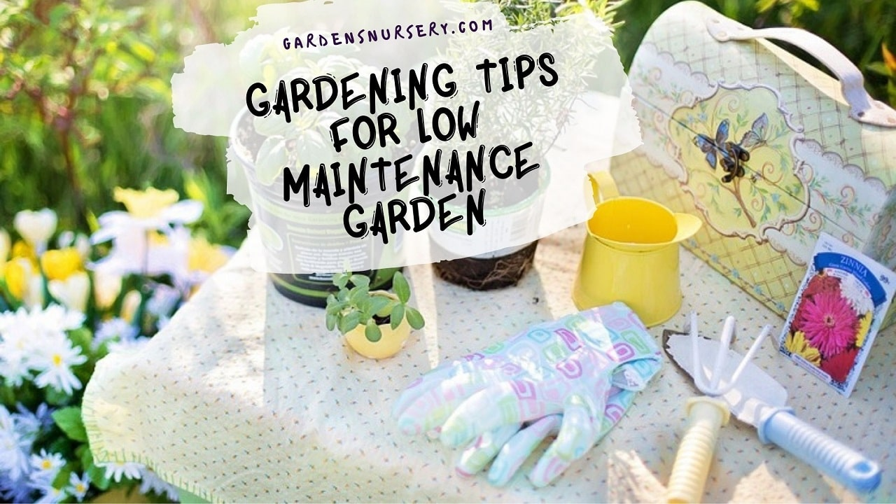 Best Gardening Tips for Low Maintenance Garden