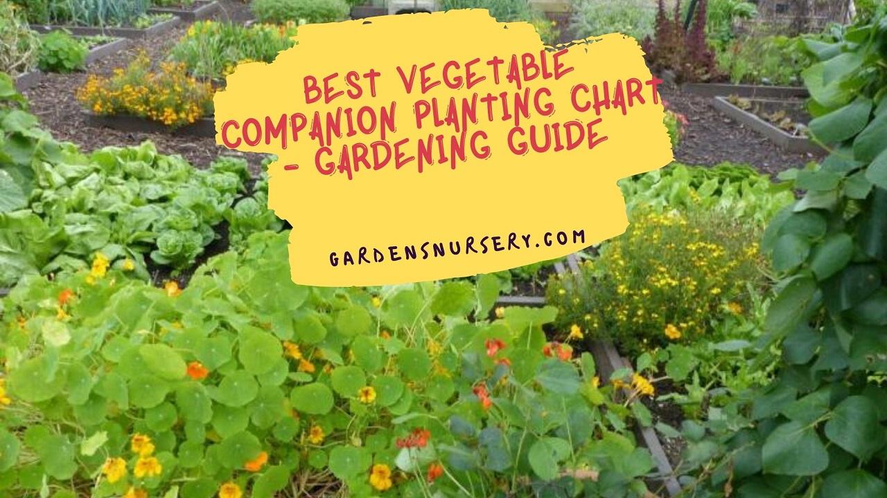 Best Vegetable Companion Planting Chart - Gardening Guide