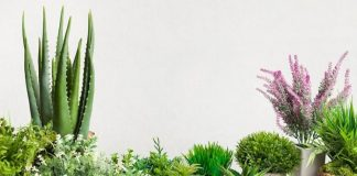 Complete Guide Cactus Plants Care