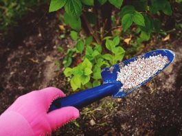 Fertilizer Tips: How to Fertilize Your Trees?