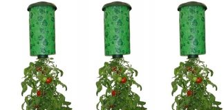 Growing Tomatoes Turvy Upside Down
