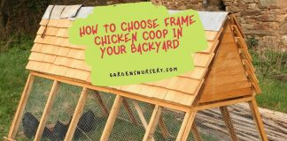 How to Choose Frame Chicken Coop in your Backyard