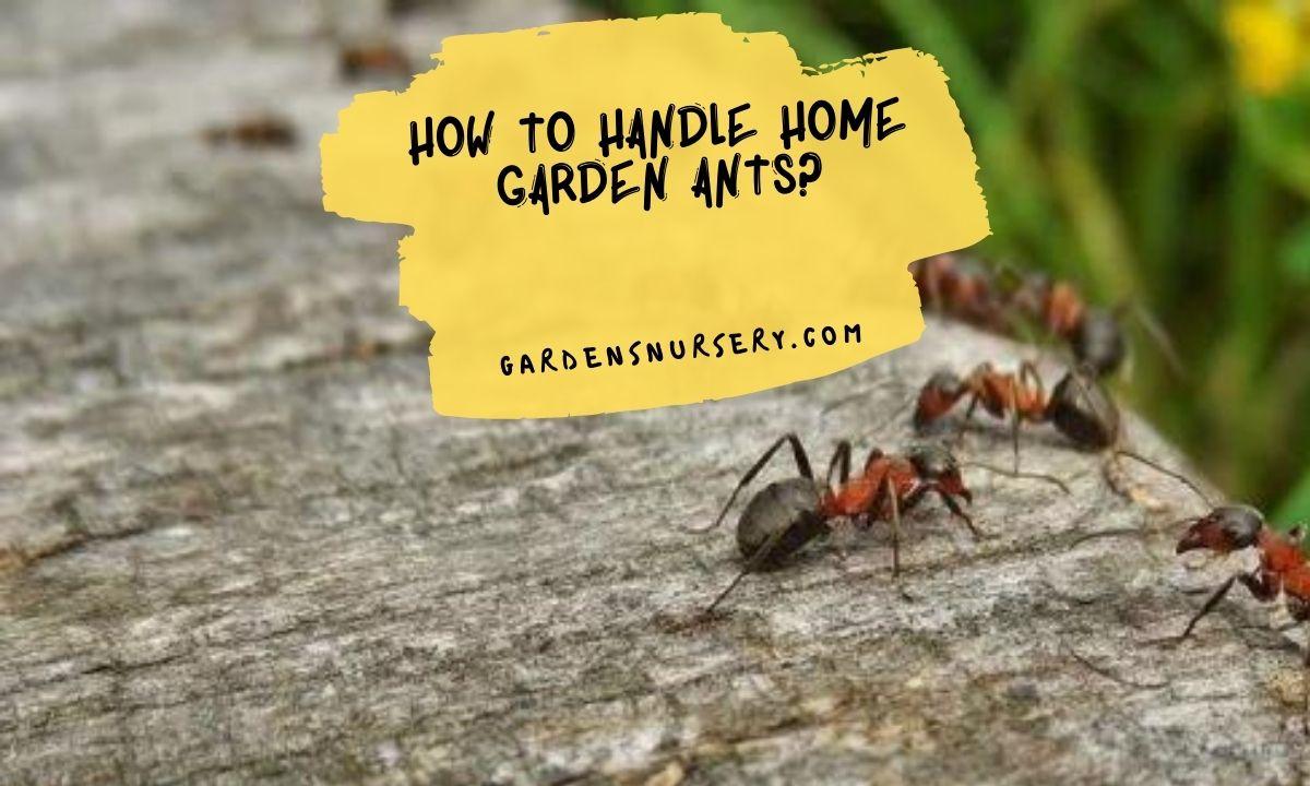 How to Handle Home Garden Ants?