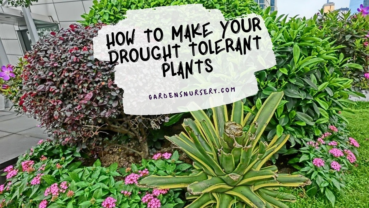 How to Make your Drought Tolerant Plants