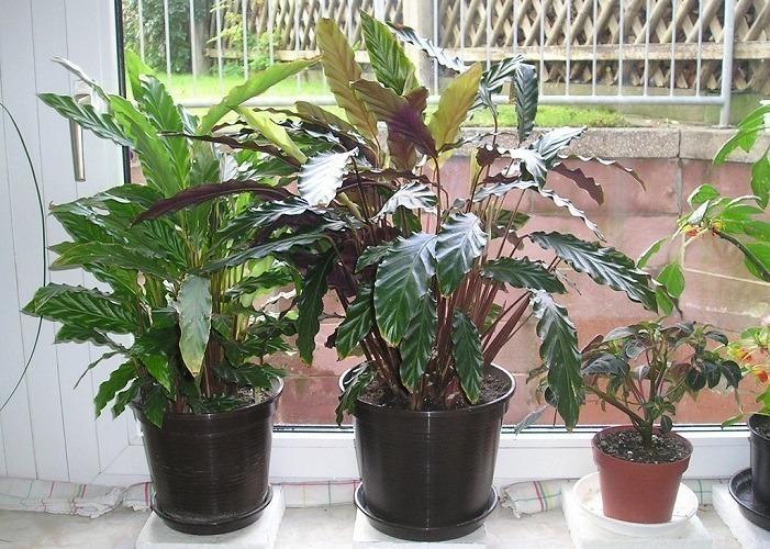 Most Indoor Plants Maintenance