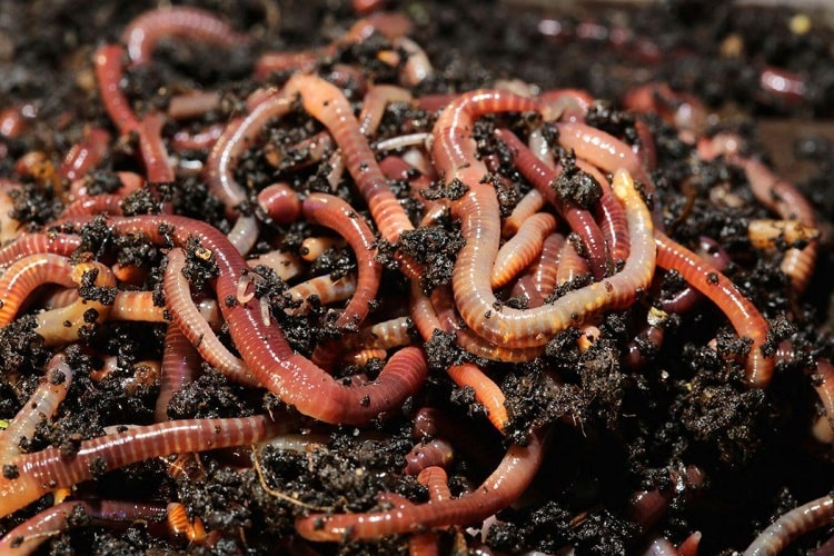 Process of Vermicomposting- One of the Useful Things of Nature