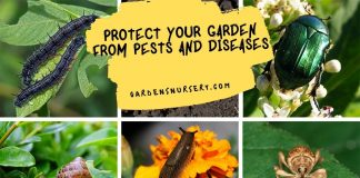 Protect your Garden from Pests and Diseases