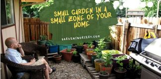 Small Garden in a Small Zone of Your Home