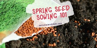 Spring Seed Sowing 101 - Gardening Guide