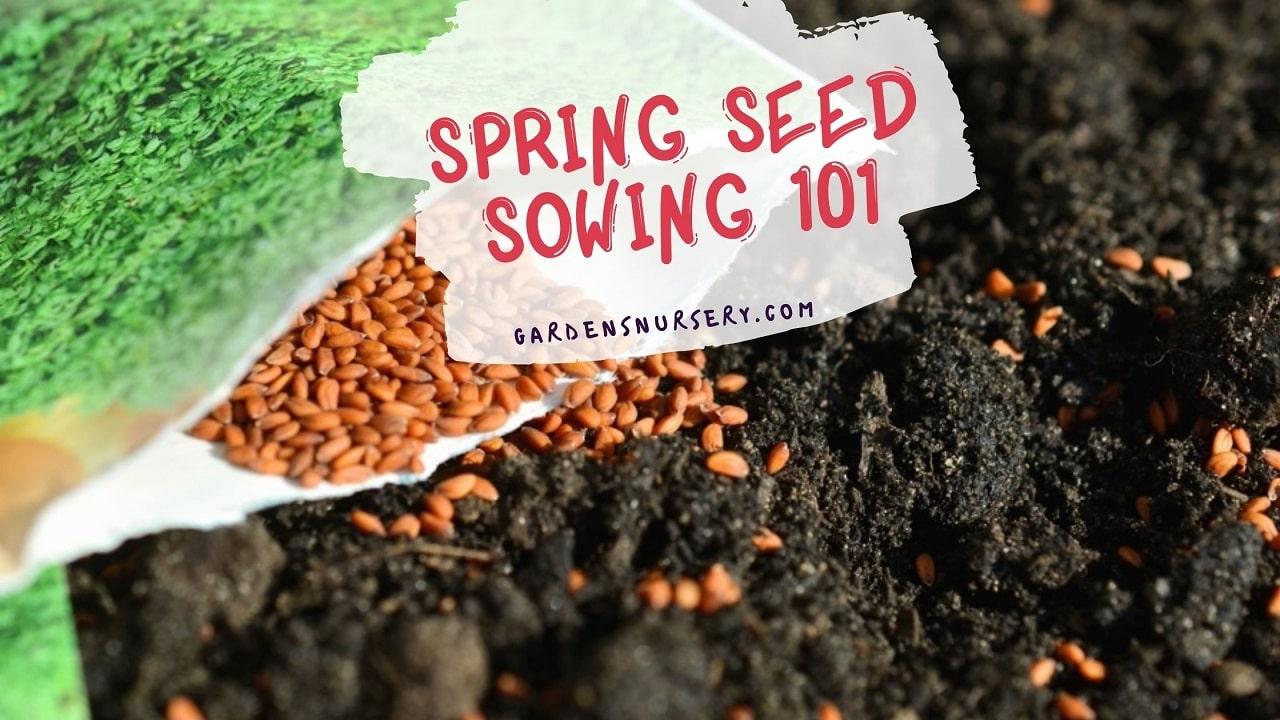 Spring Seed Sowing 101 - Gardening Guide