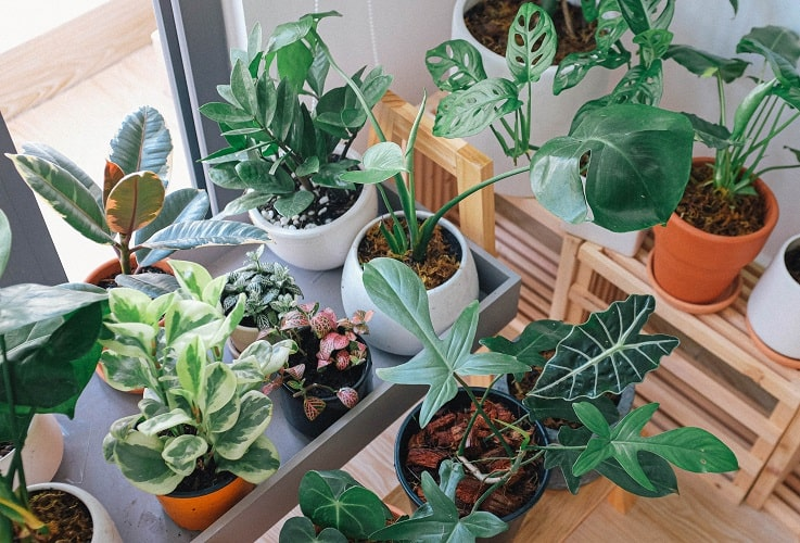 Why You Should Have Indoor Plants