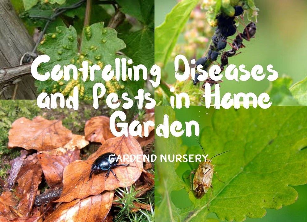 Garden Controlling Diseases and Pests