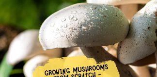 Growing Mushrooms from Scratch - Mushrooms Growing Guide