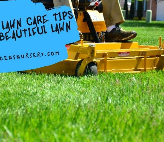 Most Lawn Care Tips For Beautiful Lawn