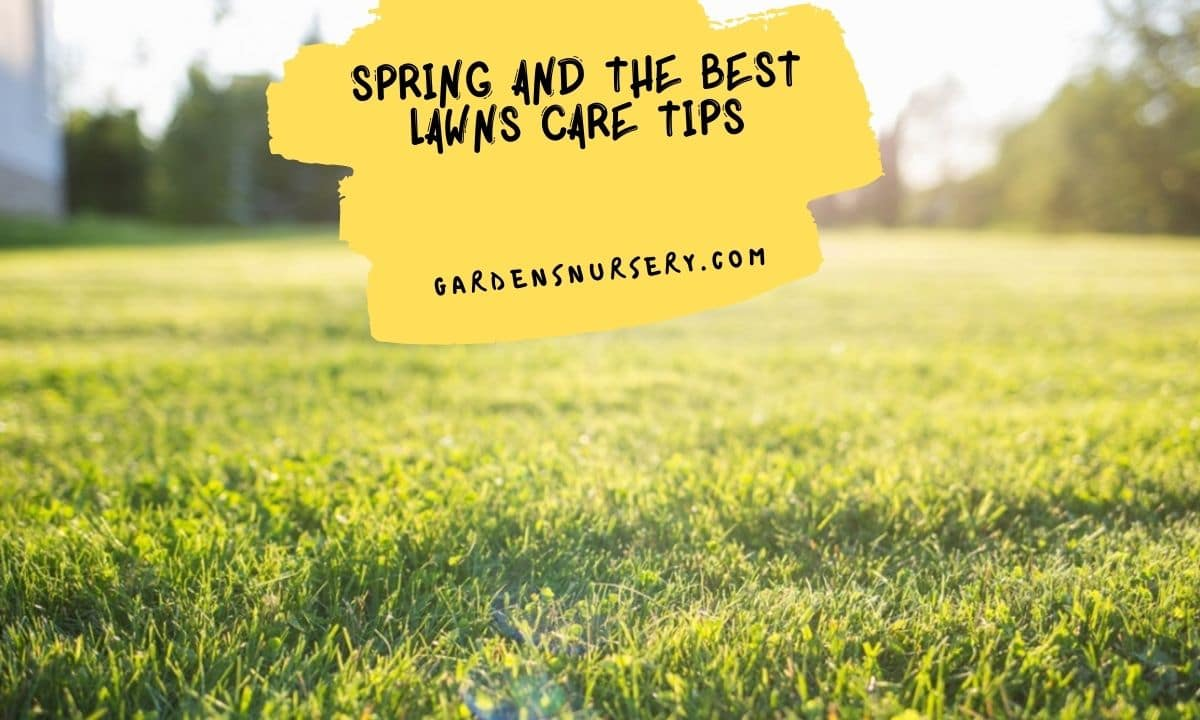 Spring and The Best Lawns Care Tips