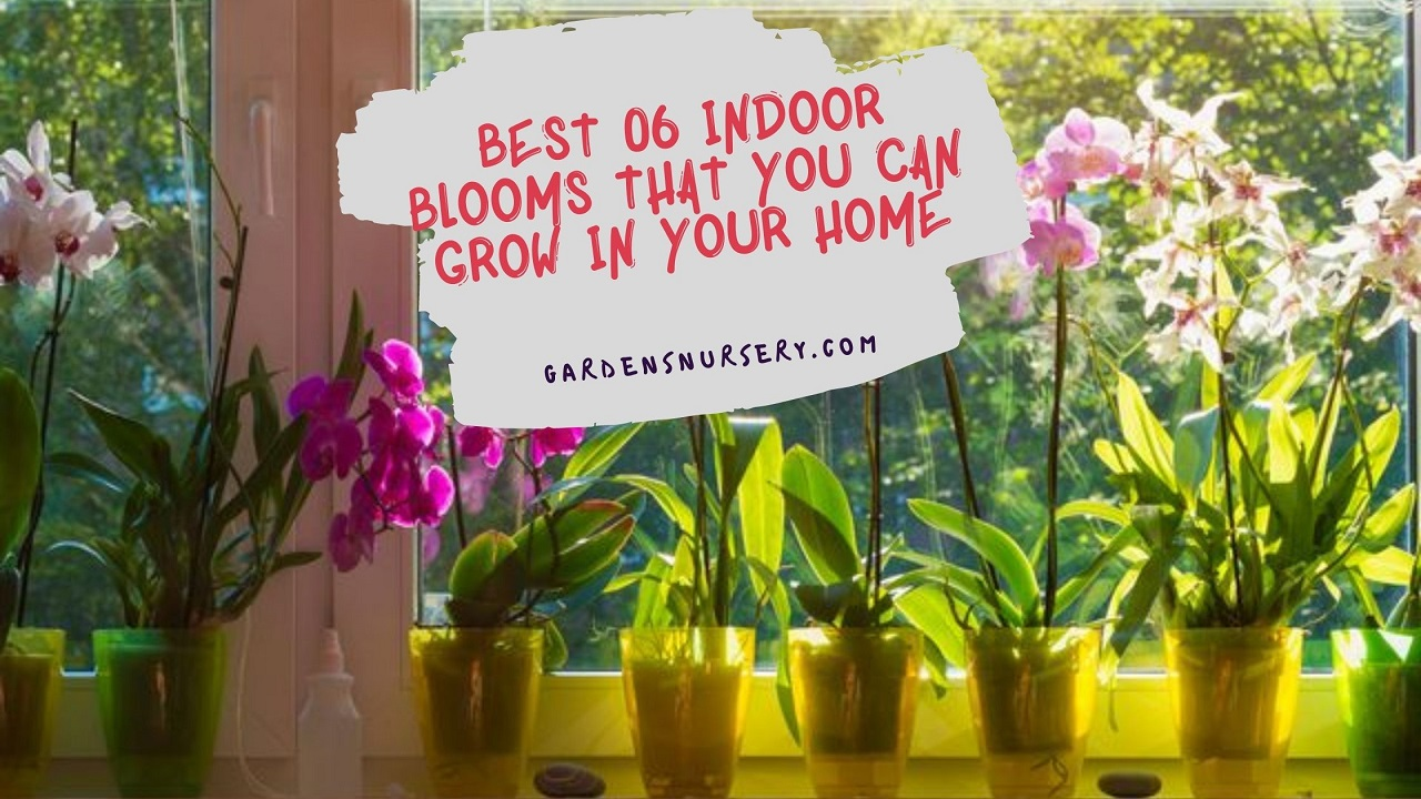 Best 06 Indoor Blooms That You Can Grow In Your Home
