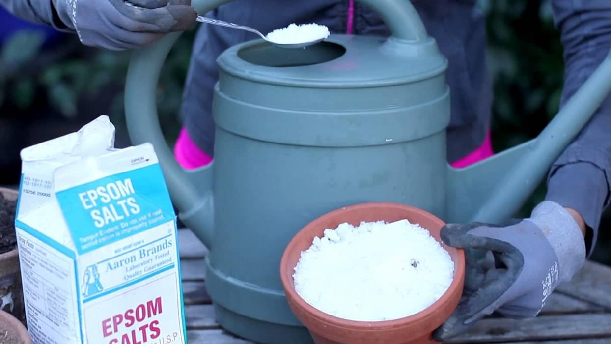 Did you know that you can use Epsom salt for plants