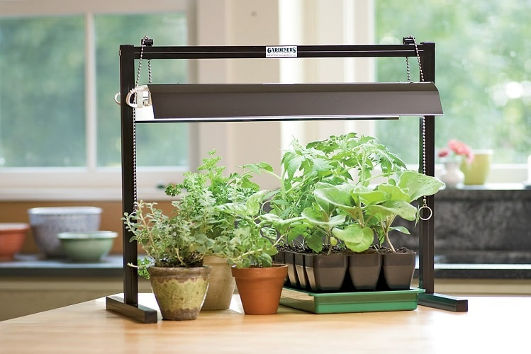 BEST GROW LIGHTS FOR PLANTS - Indoor Gardening