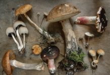Growing Mushroom in Your Home? Yes It is Possible! with Mushroom Growing Kit