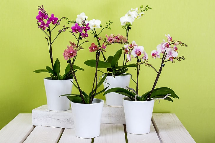 How to Grow Orchids At Home