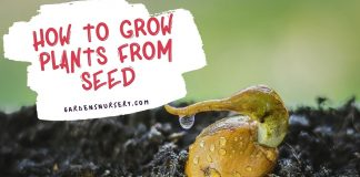 How to Grow Plants From Seed-min