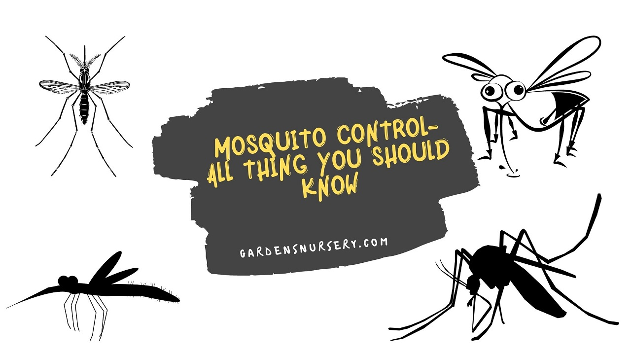 Mosquito Control- All Thing You Should Know