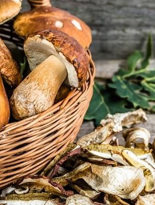 Porcini Mushrooms Harvesting Tips