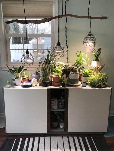 indoor lighting plants