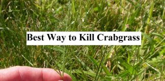 How to Get Rid of Crabgrass - Best Way to Kill Crabgrass