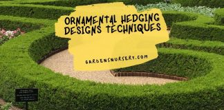 Ornamental Hedging Designs Techniques