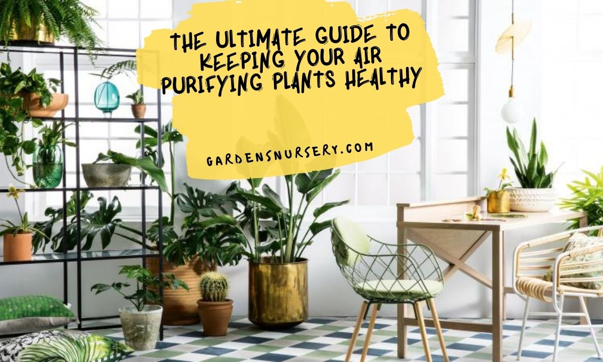 The Ultimate Guide To Keeping Your Air Purifying Plants Healthy