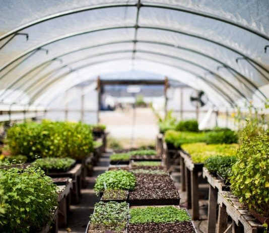 Why You Should Use Lean To Greenhouses When Growing Vegetables In Your Backyard