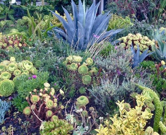 Xeriscape Gardening For Beginners