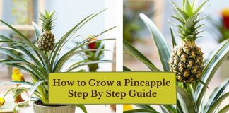 How to Grow a Pineapple - Step By Step Guide