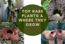 Top Rare Plants & Where They Grow