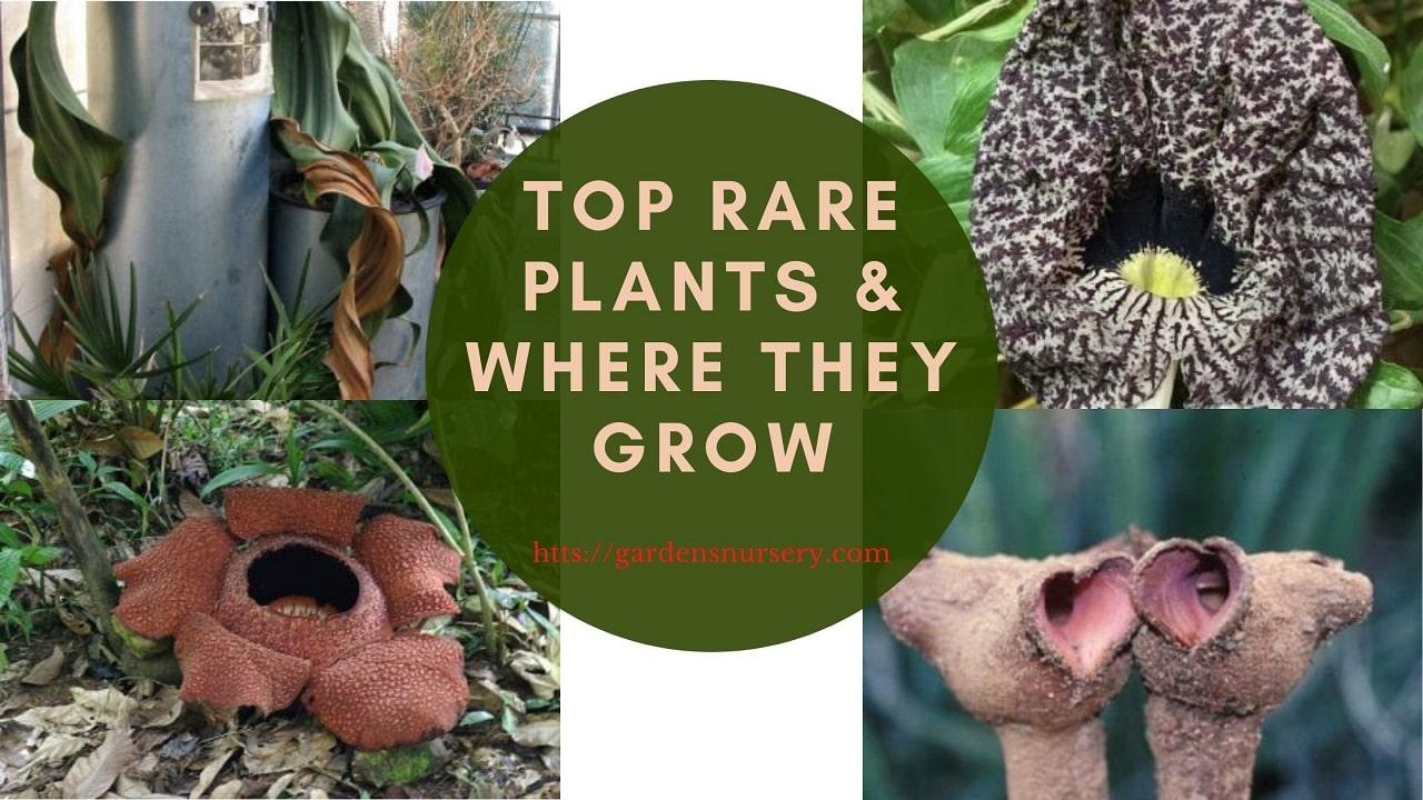Top Rare Plants &Amp; Where They Grow