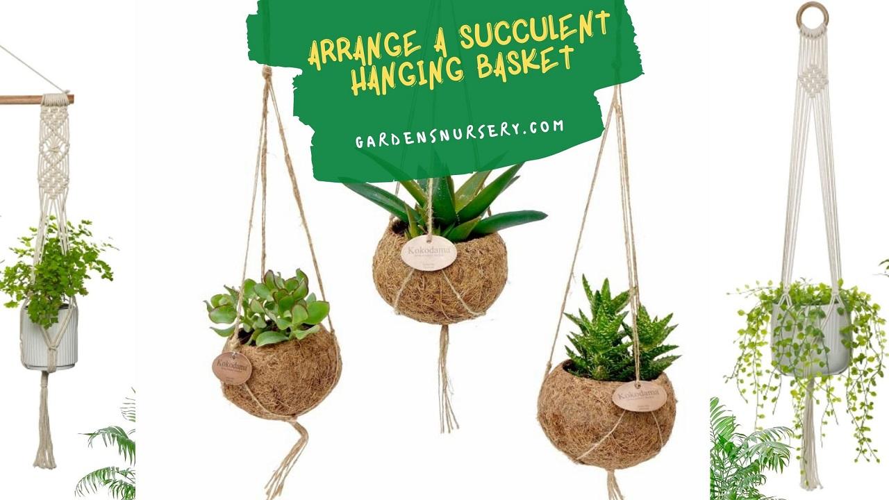 Arrange A Succulent Hanging Basket