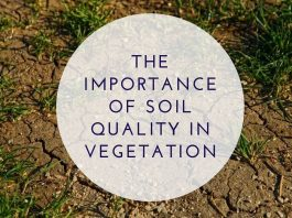 The Importance Of Soil Quality In Vegetation