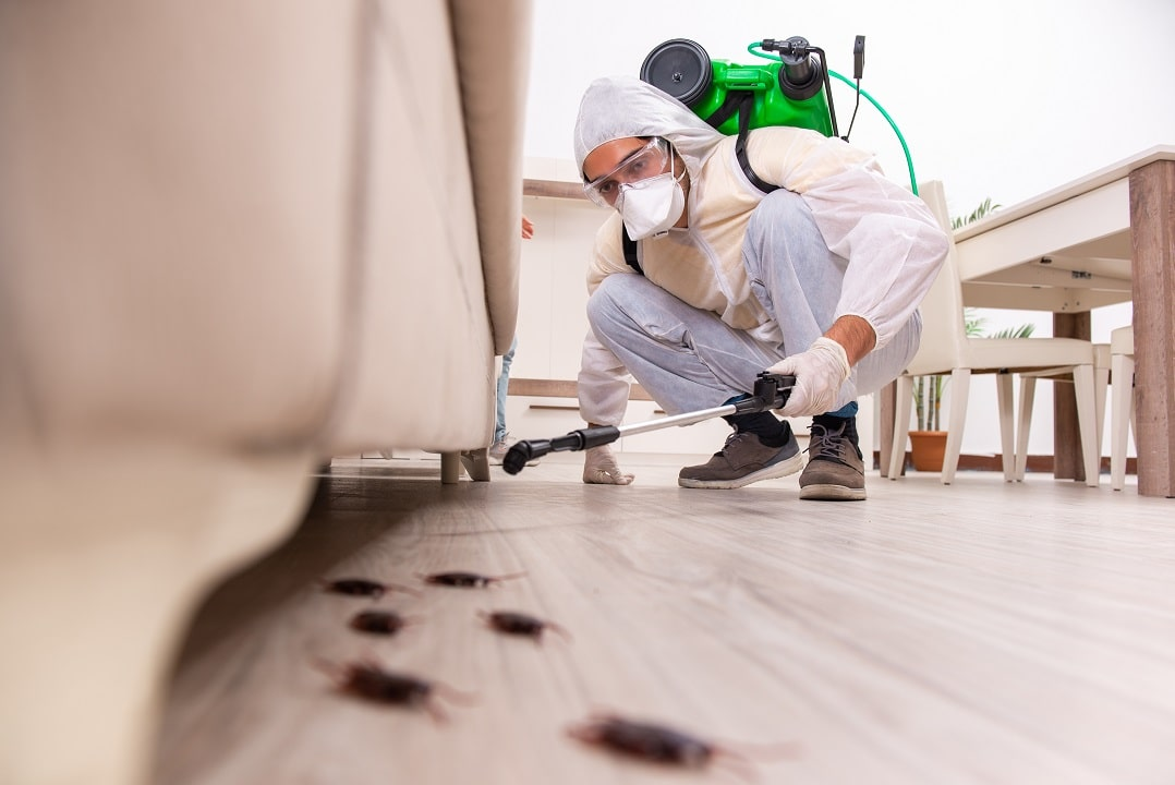Why It's Necessary For Pest Control In Fall