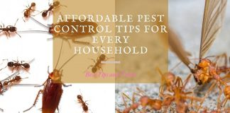 Affordable Pest Control Tips for Every Household