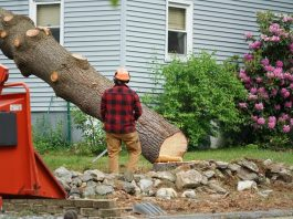 5 Reasons Why You Should Remove A Tree In Your Property