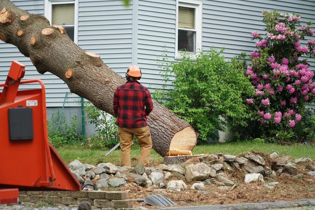Remove A Tree In Your Property