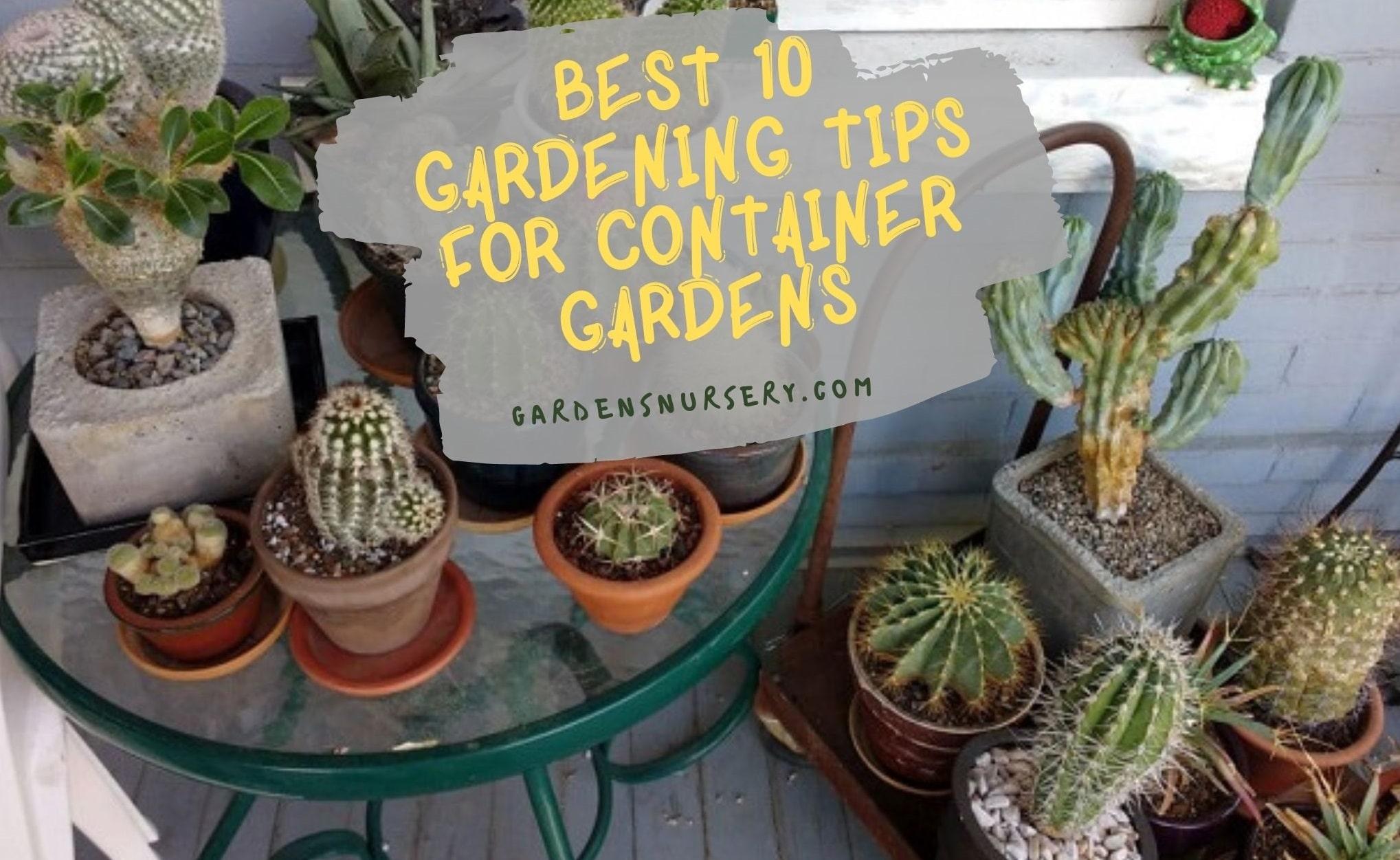 Best 10 Gardening Tips for Container Gardens