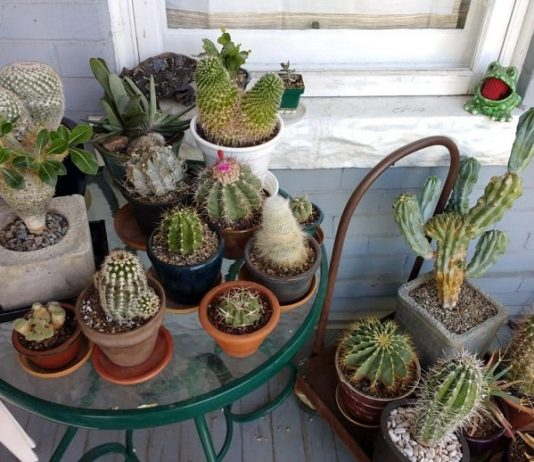 Best 10 Tips for Container Gardens