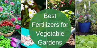 Best Fertilizers for Vegetable Gardens